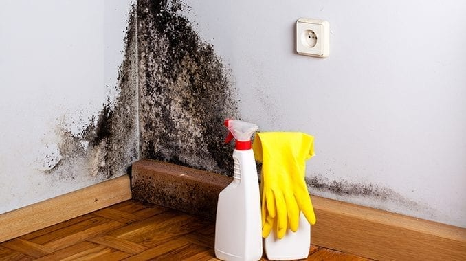 Mold and Bleach