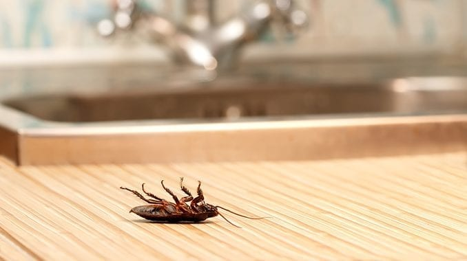 Mold and Bugs: Does Mold Attract Bugs?